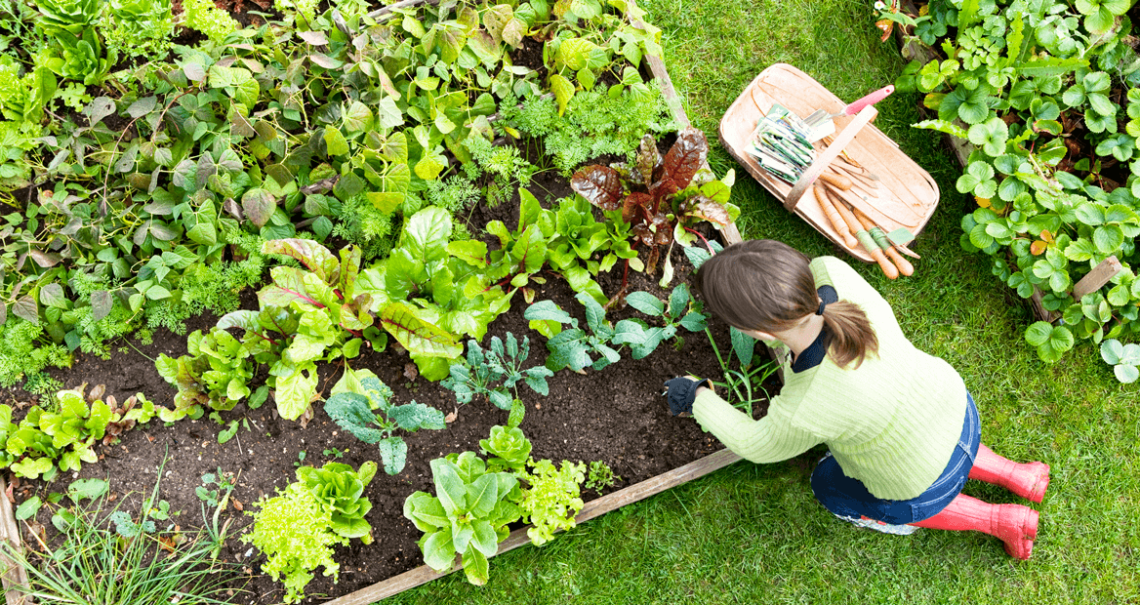 5 Tips And Tricks For Cultivating Your Own Raised Bed Vegetable
