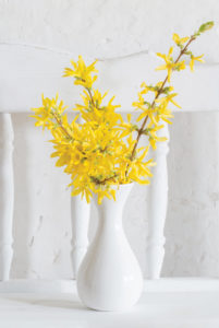 Yellows flowers in a white vase.
