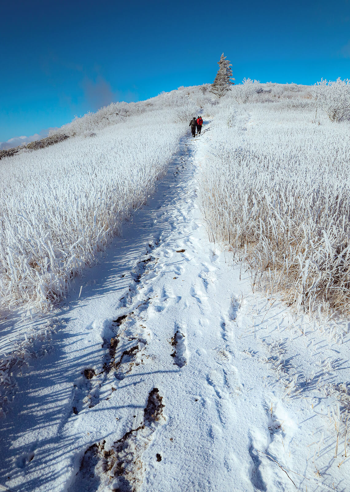 Wintry hike to a peak of Roan Mountain.