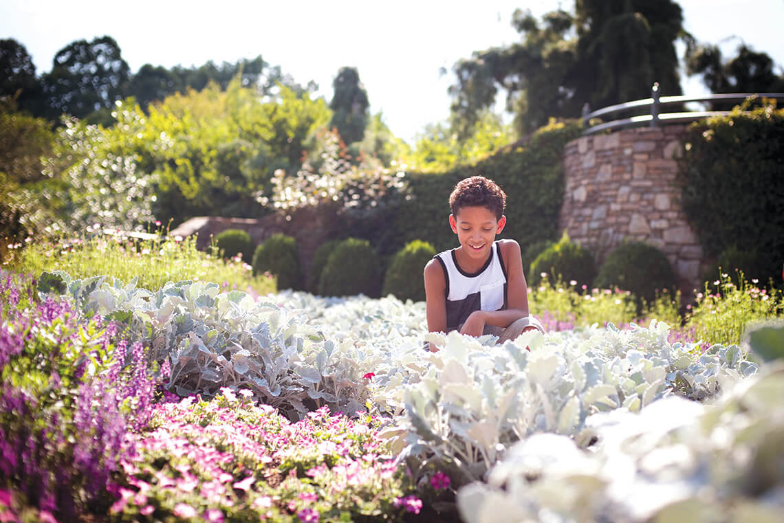 Little boy kneels in the plants at the North Carolina Arboretum.